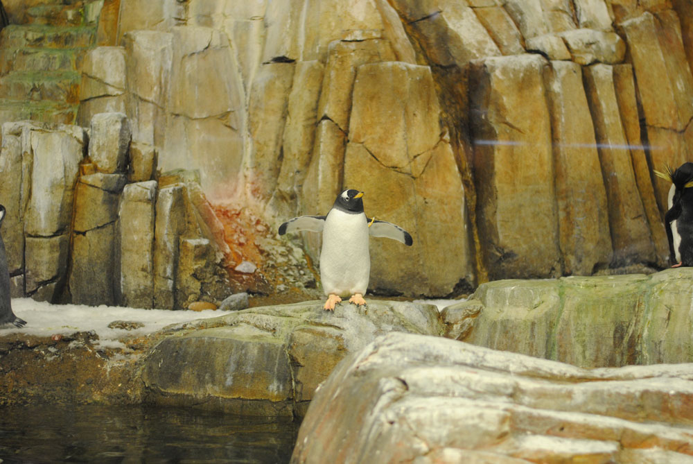 biodome-montreal-penguins