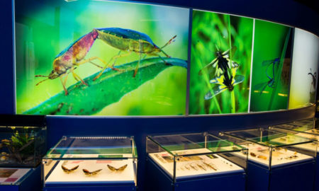 montreal-insectarium-main