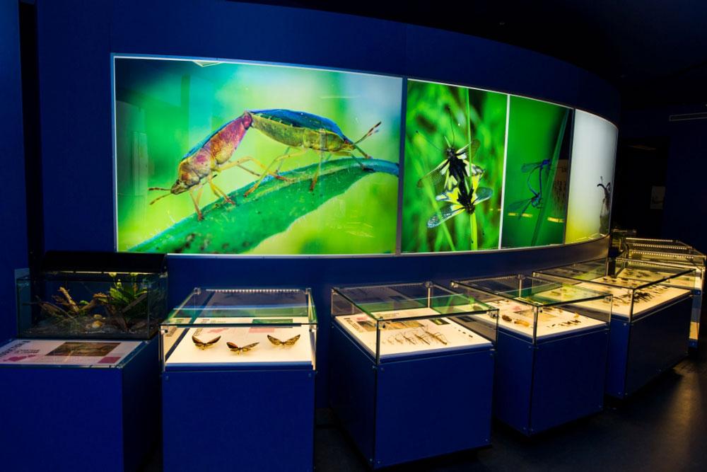 montreal-insectarium